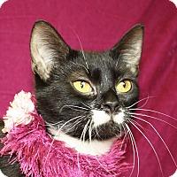 Adopt A Pet :: Selena - Jackson, MI