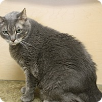Adopt A Pet :: Dusty - North Hollywood, CA