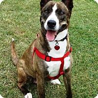 Adopt A Pet :: Babygirl - Waynesboro, PA