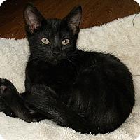 Adopt A Pet :: Primrose - Tampa, FL
