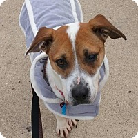 Adopt A Pet :: Rufus - Sugar Grove, IL