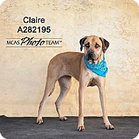Adopt A Pet :: CLAIRE - Conroe, TX