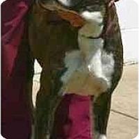 Adopt A Pet :: Cassio - Thomasville, GA