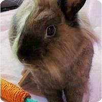 Adopt A Pet :: Ben - Huntsville, AL
