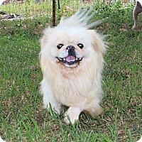 Adopt A Pet :: Pete - Foster, RI