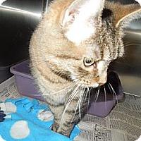 Adopt A Pet :: Lady - Medina, OH