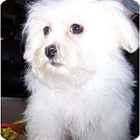 Adopt A Pet :: Brando - Antioch, IL