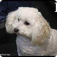 Adopt A Pet :: RJ - Rockwall, TX