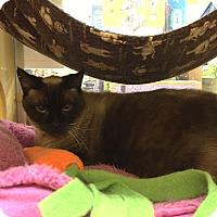 Adopt A Pet :: Jezabell - Monroe, GA