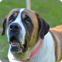 Adopt A Pet :: Holly - Bellflower, CA