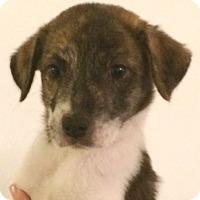 Adopt A Pet :: Ghost#4F - geneva, FL