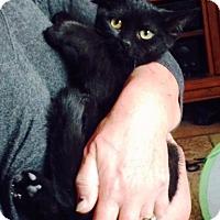 Adopt A Pet :: Sadie - Orange, CA