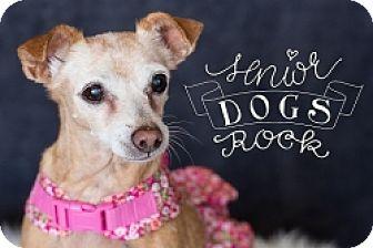 Chihuahua Mix Dog for adoption in Mesa, Arizona - Cinnamon