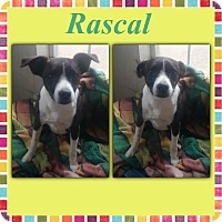 Adopt A Pet :: Rascal in CT - East Hartford, CT