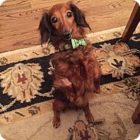 Adopt A Pet :: Gretchen - Houston, TX
