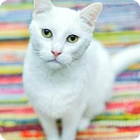 Domestic Shorthair Cat for adoption in West Des Moines, Iowa - Jasmine