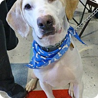 Adopt A Pet :: Maverick-adoption pending - Schaumburg, IL