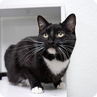 Adopt A Pet :: Momma Trisha - Montclair, CA