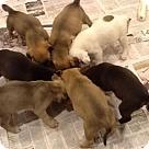 Adopt A Pet :: Abandoned Pup 2