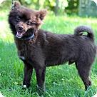 Adopt A Pet :: Scion