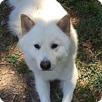 Adopt A Pet :: Yeti - Deltona, FL