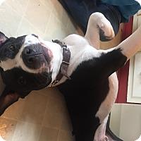 Adopt A Pet :: Rocky - Montreal, QC