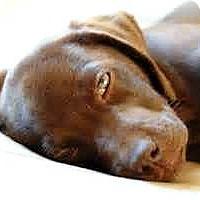Adopt A Pet :: Count Chocula - Oswego, IL