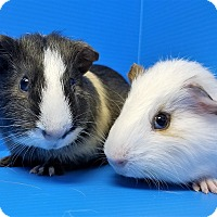Adopt A Pet :: Waffles and Pofflet - Lewisville, TX