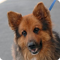 Adopt A Pet :: Big Buddy - Palmdale, CA