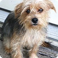 Adopt A Pet :: Mr. Pickles - Norwalk, CT
