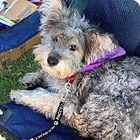 Adopt A Pet :: Cameron - Scottsdale, AZ