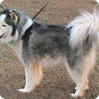 Adopt A Pet :: Faith - Maynardville, TN