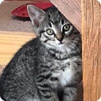 Adopt A Pet :: Tallulah C1572 - Shakopee, MN