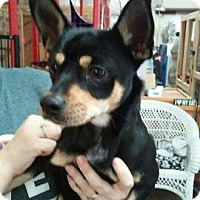 Adopt A Pet :: Nick - Centerville, GA