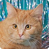 Adopt A Pet :: Frances - Cincinnati, OH