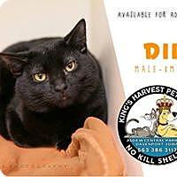 Adopt A Pet :: Dill - Davenport, IA