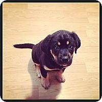 Adopt A Pet :: Nova - Saskatoon, SK