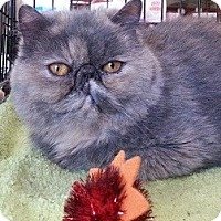 Adopt A Pet :: Clara - Beverly Hills, CA