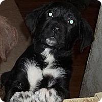 Adopt A Pet :: Panda - Rome, NY