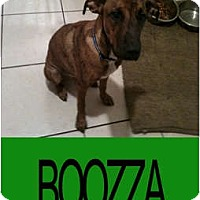 Adopt A Pet :: BOOZZA - Hollywood, FL