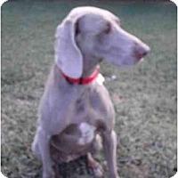 Adopt A Pet :: Zoe **ADOPTED** - Eustis, FL