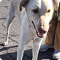 Adopt A Pet :: Tahoe - Scottsdale, AZ