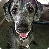 Adopt A Pet :: Ferdinand - Santa Barbara, CA