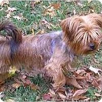 Adopt A Pet :: Rita - Dayton, OH