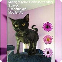 Adopt A Pet :: Midnight - Mobile, AL
