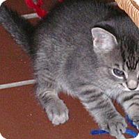 Adopt A Pet :: Sprinkles - Stafford, VA