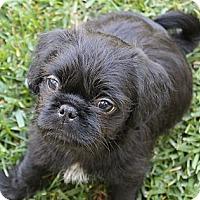Adopt A Pet :: Tony - La Habra Heights, CA