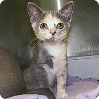 Adopt A Pet :: Frannie - Dover, OH