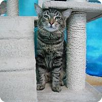 Adopt A Pet :: Bentley - Newport Beach, CA
