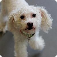 Adopt A Pet :: Homer - Atlanta, GA
